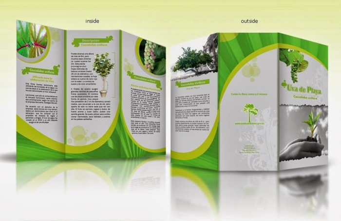 Thiet ke brochure chuyen nghiep